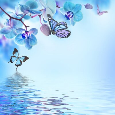 Sticker Floral background of tropical orchids and  butterfly
