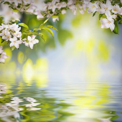 Flower background_122