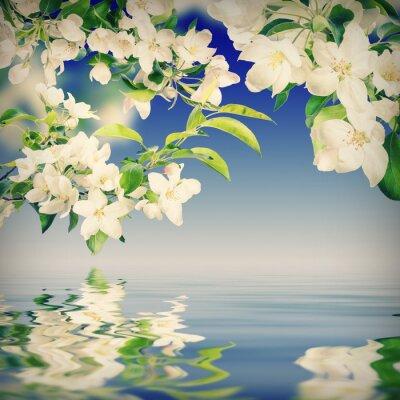 Flower background_178a