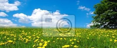 Flower meadow landscape