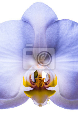 Flower orchid isolated