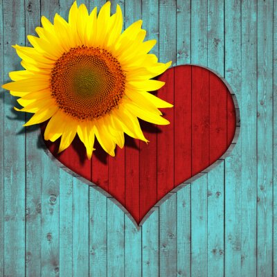 Sticker flower sunflower heart and turquoise wood background
