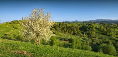 Sticker Flowering apple tree on a grassy meadow