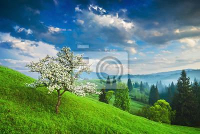 Flowering tree in Carpathians
