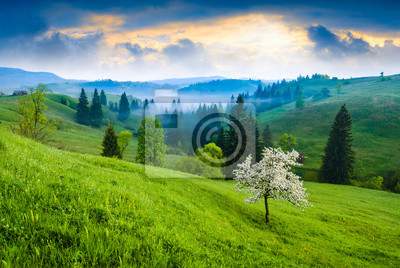 Flowering tree on a green hill