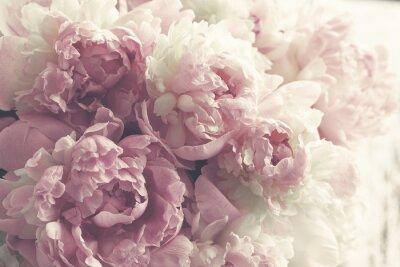 Sticker Fluffy pink peonies flowers background