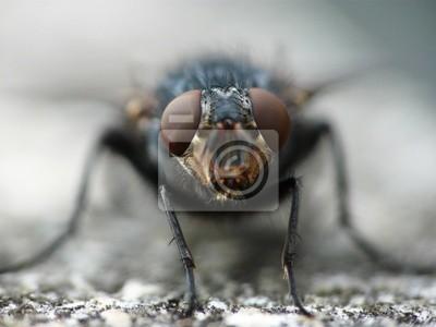 Sticker fly