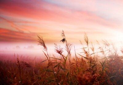 Foggy Landscape.Early Morning Mist.