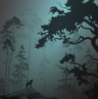 Sticker foggy landscape with silhouette of forest, pine trees and wolf, moonlight