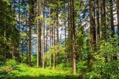Sticker forest landscape