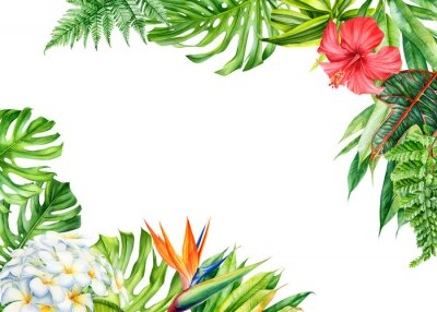 Sticker frame, tropical leaves and flowers on an isolated background, greeting cards with space for text, watercolor painting,  floral design, plumeria, strelitzia, palms, monstera, ficus