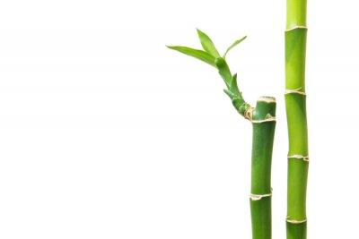 Sticker Fresh bamboo isolated on white background