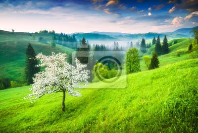 Fresh Carpathian morning
