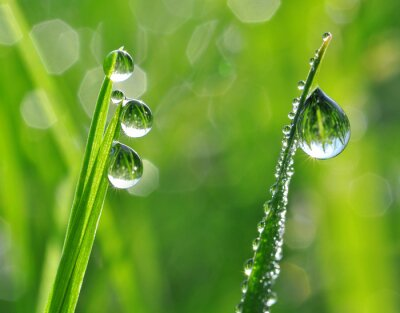 Sticker Fresh grass with dew drops close up
