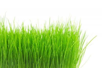 Sticker Fresh green grass