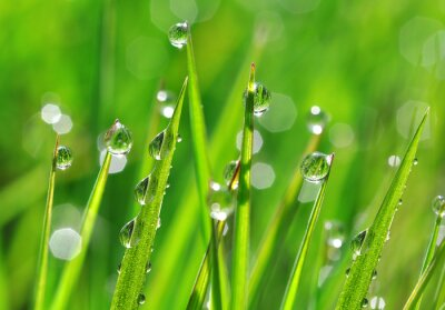 Sticker Fresh green grass with dew drops closeup. Nature Background