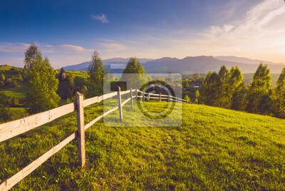 Fresh spring Carpathian meadow