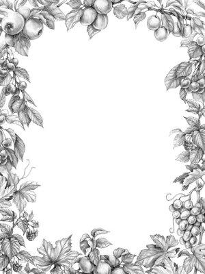 Sticker Fruit Vertical Frame Pencil Drawing