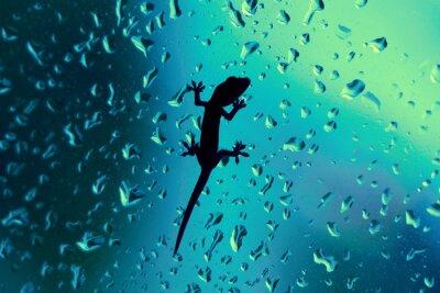 Sticker Gecko On Glass Window Wet With Rain Drops