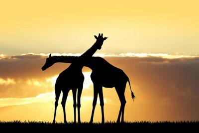 Sticker giraffe silhouette at sunset