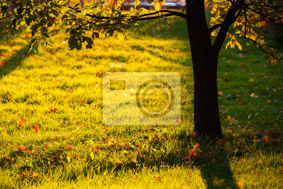 Sticker Golden light shining to grass and tree silhouette