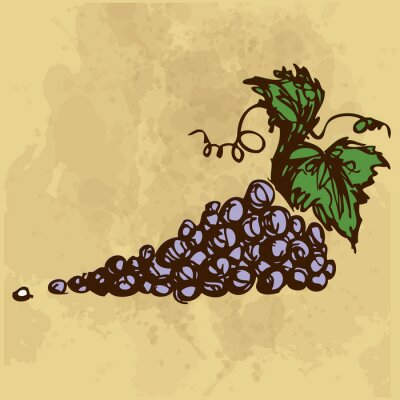 Sticker Grapes hand drawing