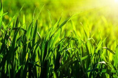 Sticker  grass and sun light