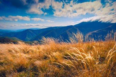 Grass on a wind