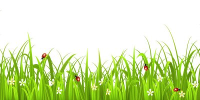 Sticker Grass with ladybird isolated on white background