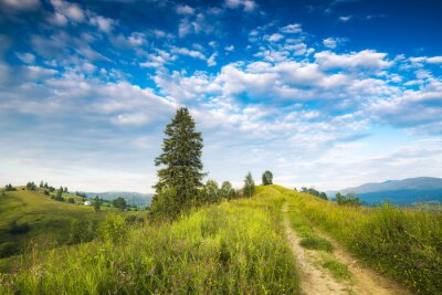 Sticker Grassy hills of carpathian alpine village