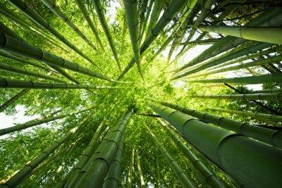 Sticker Green bamboo nature backgrounds