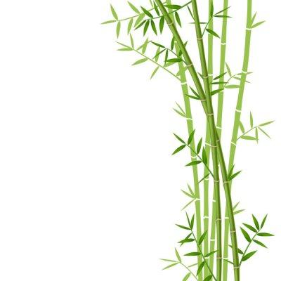 Sticker Green bamboo on white background, vector illustration