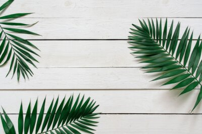 Sticker Green flat lay tropical palm leaf branches on white wooden planks background. Room for text, copy, lettering.