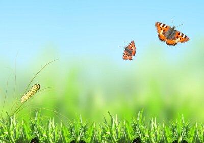 Sticker Green grass, caterpillar and butterfly