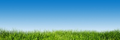 Sticker Green grass on blue clear sky, spring nature theme. Panorama
