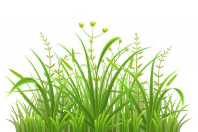 Sticker Green grass pattern on white background