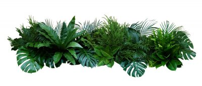 Sticker Green leaves of tropical plants bush (Monstera, palm, rubber plant, pine, bird's nest fern) floral arrangement indoors garden nature backdrop isolated on white background, clipping path included.