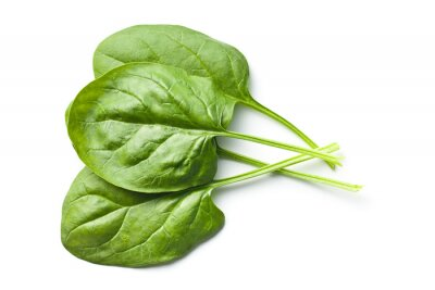 Sticker green spinach leaves