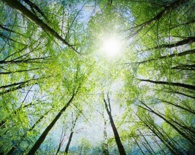 Sticker green trees