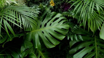 Sticker Green tropical leaves Monstera, palm, fern and ornamental plants backdrop background