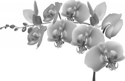 Sticker grey orchid branch on white background