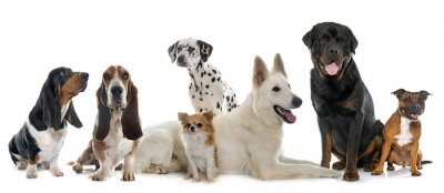 Sticker group of dogs