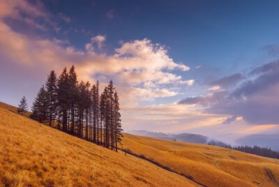 Group of fir trees on a yellow autumn meadow