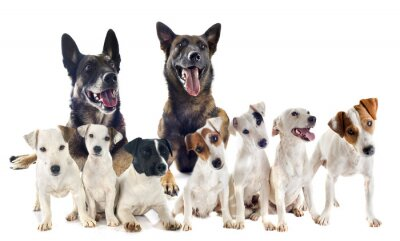 Sticker group of jack russel terrier and malinois