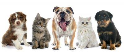 Sticker group of pet