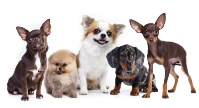 Sticker group of small decorative dog companions