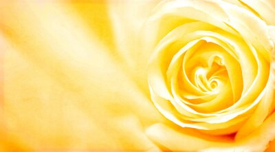 Sticker Grunge banner with yellow rose and paper texture