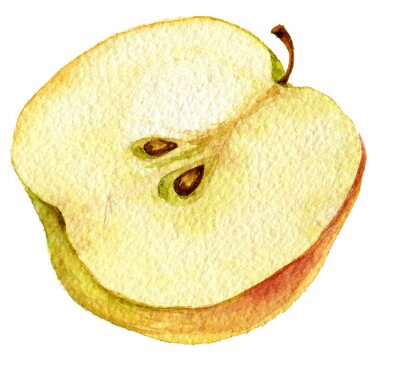 Sticker Half apple drawing by watercolor