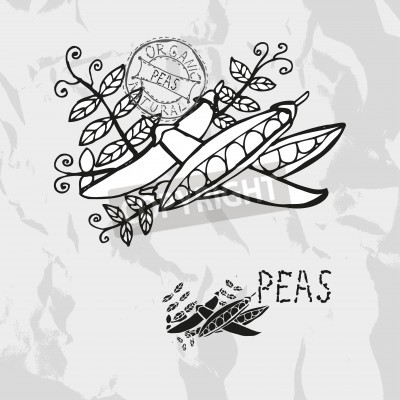 Sticker Hand drawn peas with leaves, design elements. Vegetable. Can be used for cards, invitations, gift wrap, print, scrapbooking. Kitchen theme