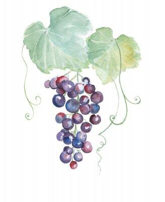 Sticker Hand drawn watercolor illustrations of purple grapes